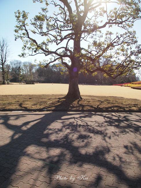 木洩れ日♪