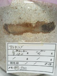 TS-JACOB18g♀3