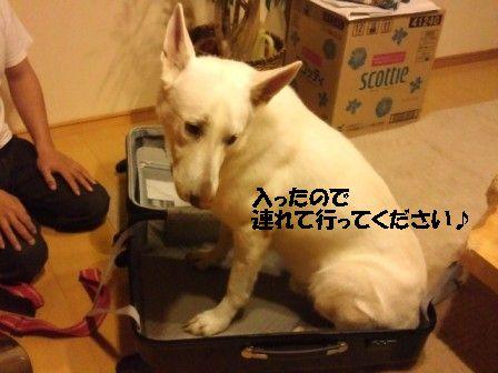 2_20111005203841.jpg