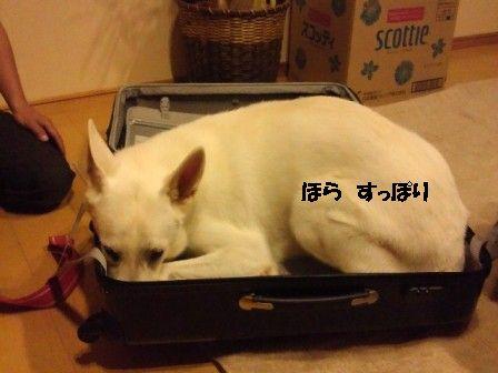3_20111005203840.jpg