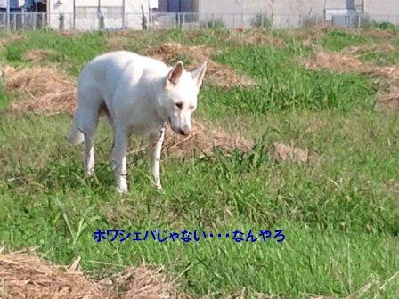 4_20111017105239.jpg