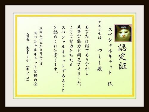 Special Cat-tsukushi