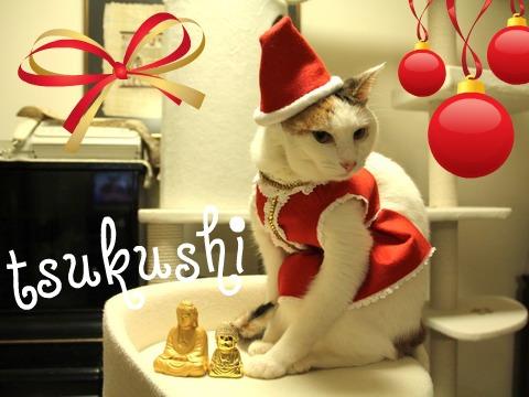tsukushi_Xmas2010.jpg