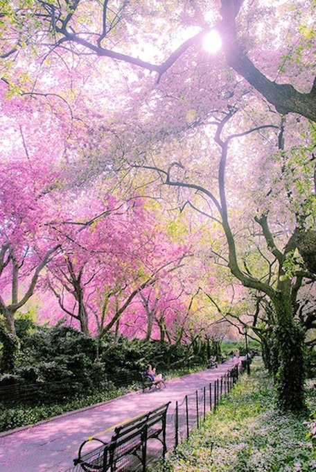 NYConservatory_GardenCentral_ParkFlowering_Trees07.jpeg