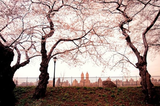 centralpark11.jpg