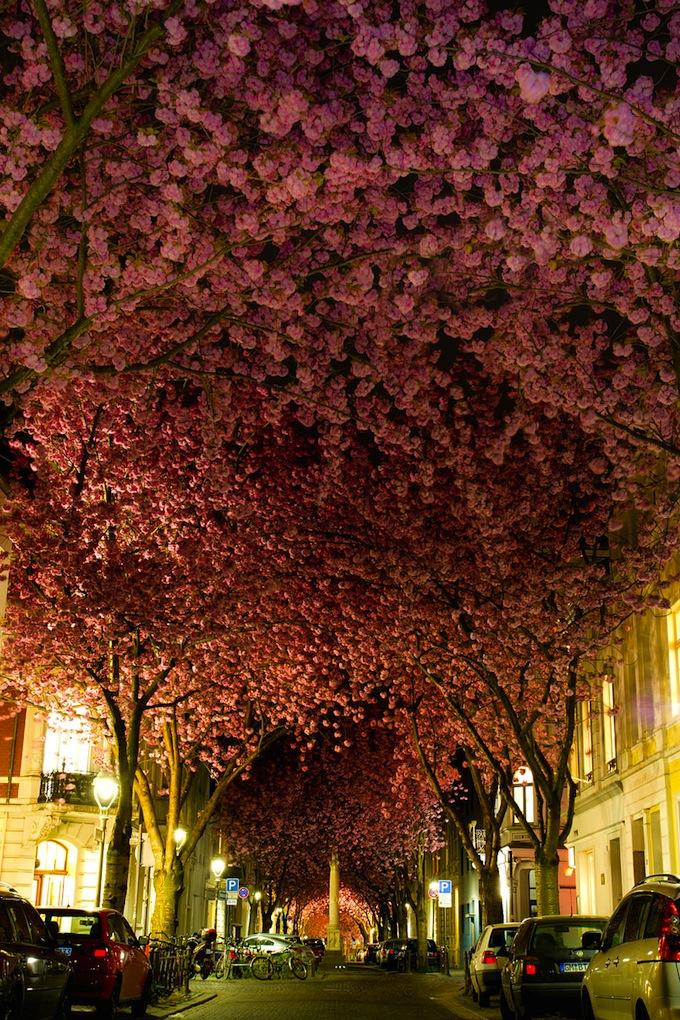 cherry-blossoms-sakura-spring-10.jpg