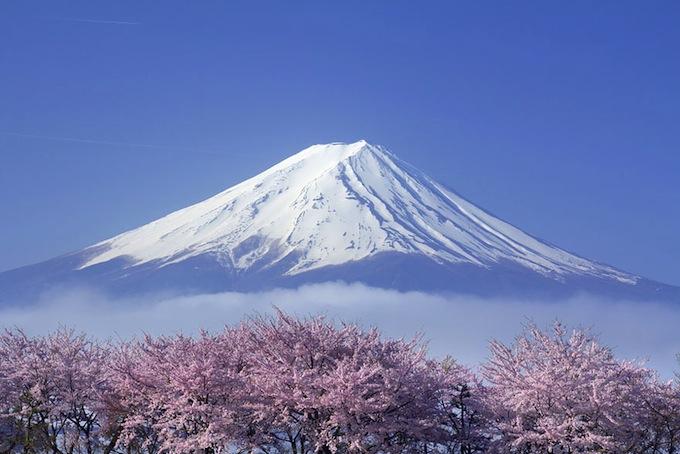 cherry-blossoms-sakura-spring-16.jpg