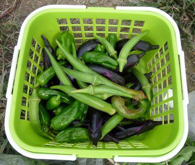 101014収穫