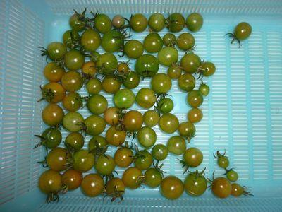 110102収穫