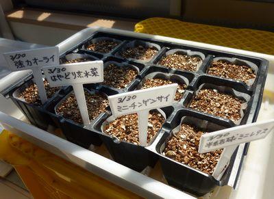 110330葉菜の種まき