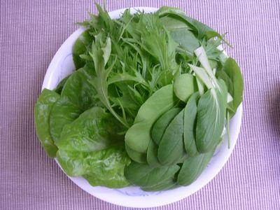 110514室内野菜収穫