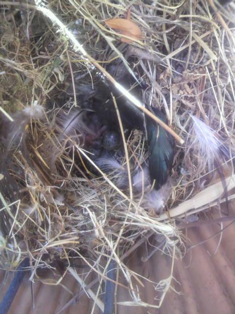 雀の巣-2