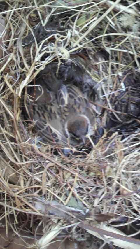 雀の巣-4