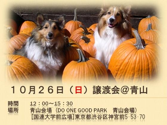1026青山譲渡会1