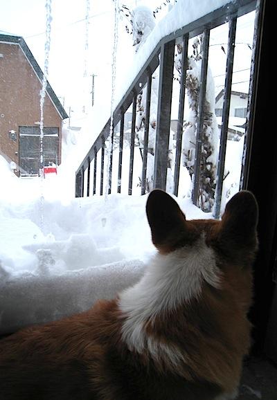 大雪2013の2