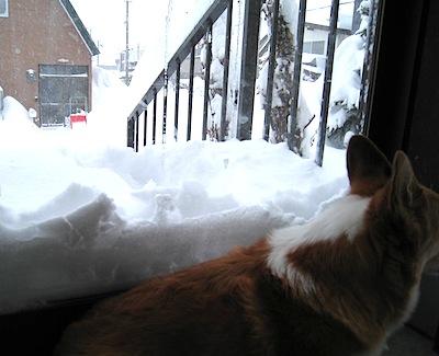 大雪2013の1