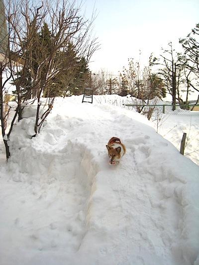 大雪2013.2