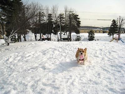 大雪2013・4