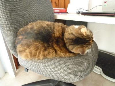 cat10302.jpg