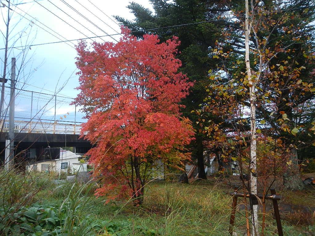harumi2014-10 141
