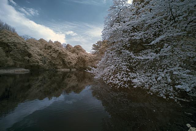 100403_003_新宿御苑の花見