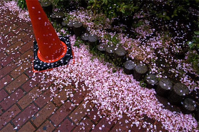 100412_004_桜