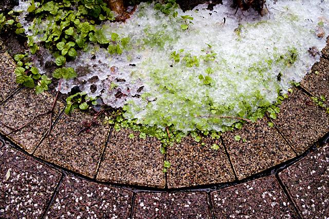 100417_002_4月17日の雪