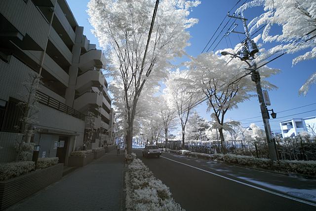 100502_002_赤外写真