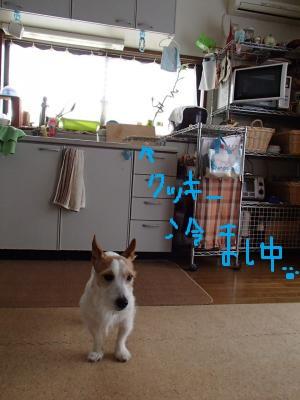P2270643_convert_20130227153904-1.jpg