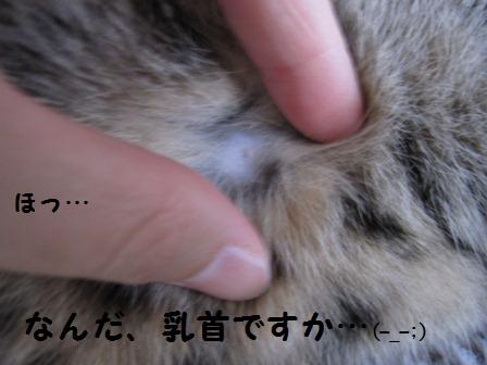 toto-p-44-7.jpg