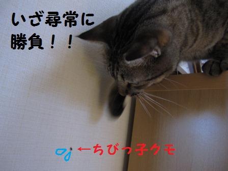 toto-p-60-4.jpg