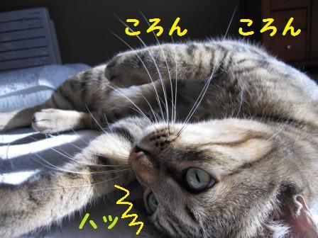 toto-p-65-2.jpg
