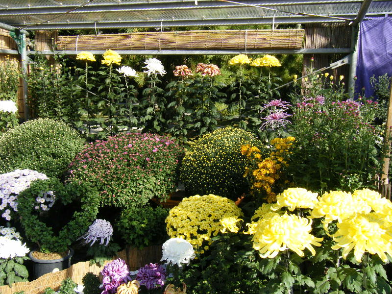 総合花壇2