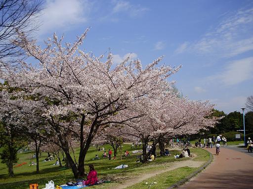 春日公園③