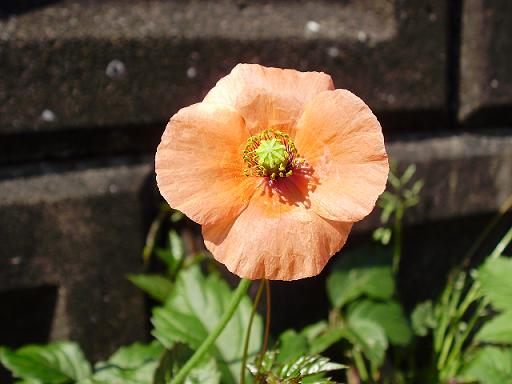 道端の花②