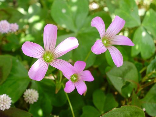 道端の花④