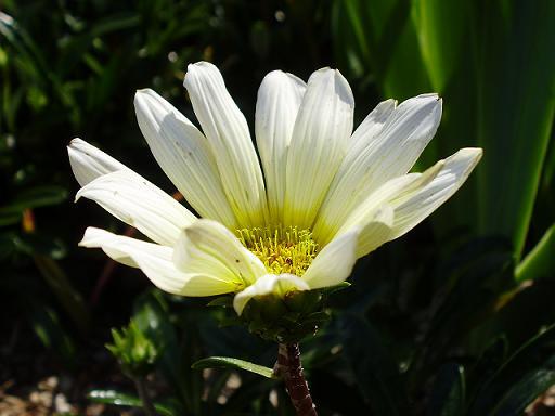 道端の花⑤