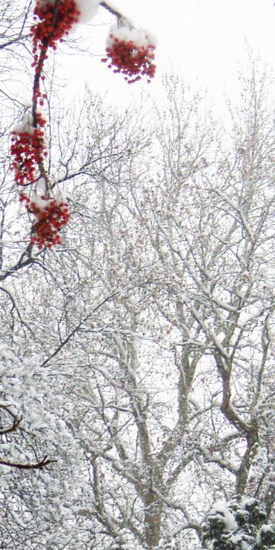雪_convert_20120120205925