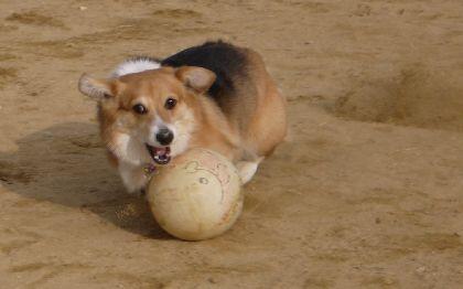 ふくサッカー