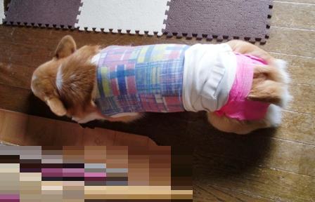 避妊手術 4