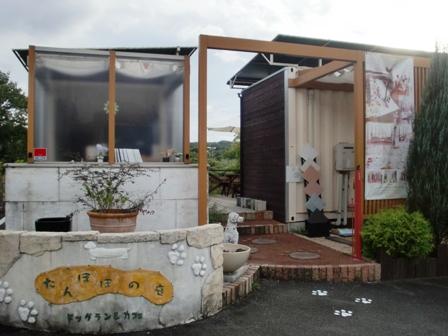 たんぽぽの庭 1