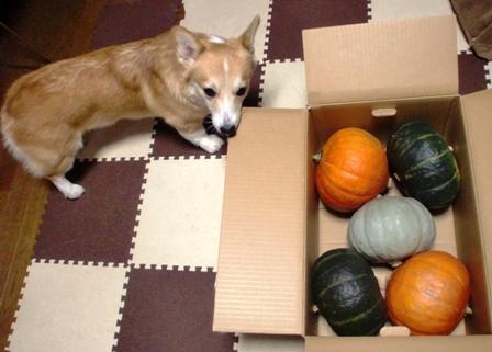 10月かぼちゃ 2