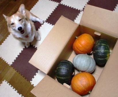 10月かぼちゃ 4