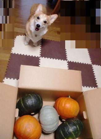 10月かぼちゃ 3