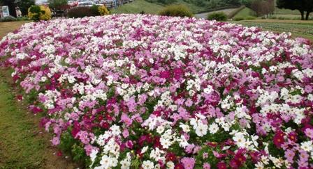 花さじき 10