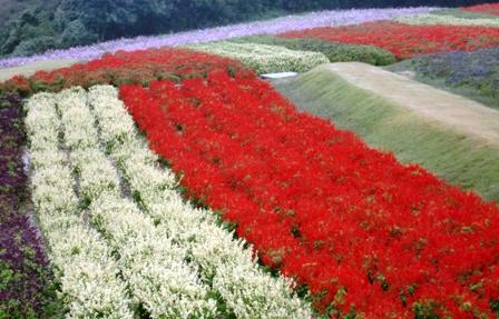 花さじき 11