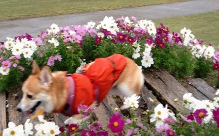 花さじき 24