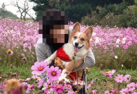 花さじき 5