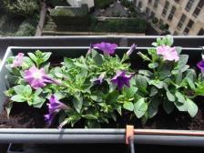 Gardening 03