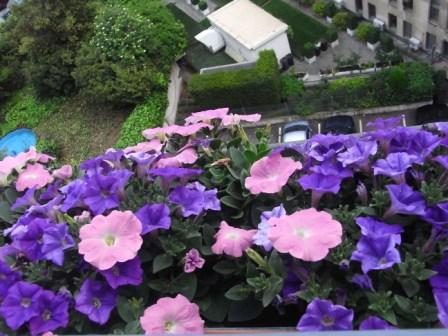 Gardening 10
